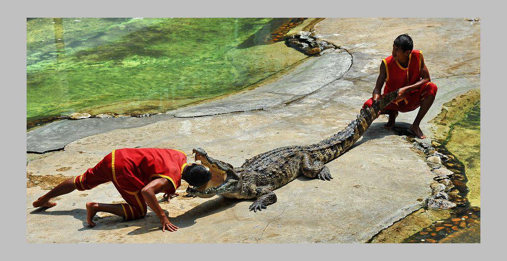 泰国三头蛇神像