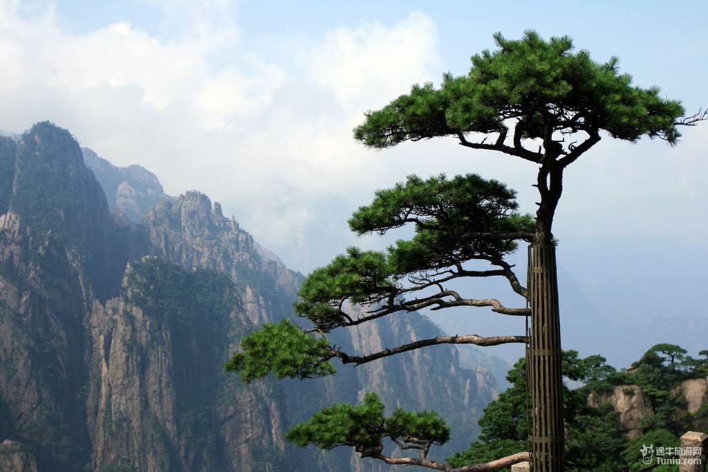 全国最好看的风景树